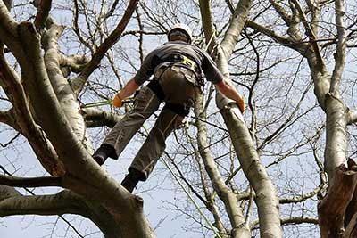 Tree Removal Glasgow