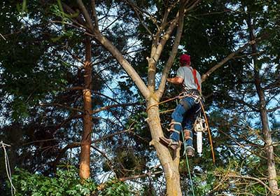 Tree surgeon Glasgow