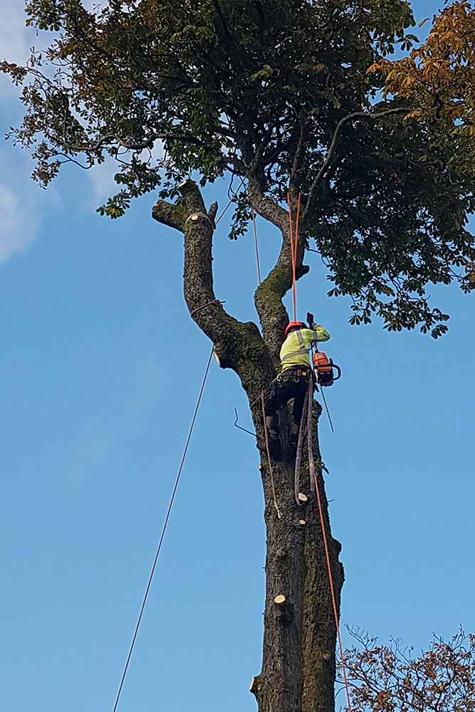 Tree Surgeons Glasgow