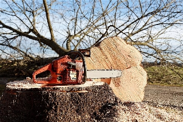 Tree Chainsaw