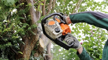 Tree Surgeon Picture