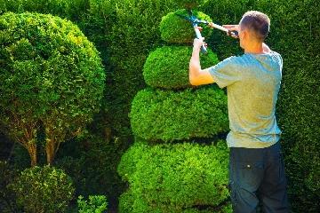Hedge trimming service-Cheltenham.