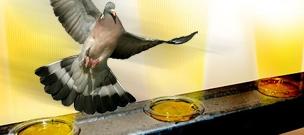 Bird Gel