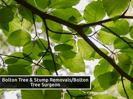 https://www.boltontreesurgeon.co.uk/ website