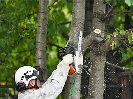 https://www.kennewicktreeservice.com/ website