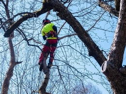 https://www.rapidcitytreepros.com/ website
