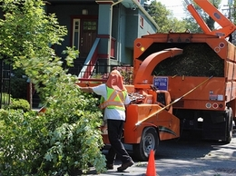 https://www.treeservicekansascitypro.com/ website