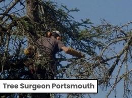 https://www.portsmouthtreesurgeon.com/ website
