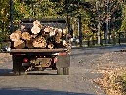 https://www.treeservicenorwalk.com/ website