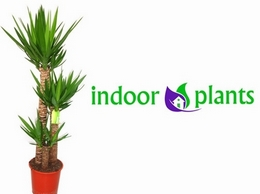 https://www.indoor-plants.co.uk/ website