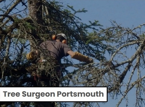 https://www.portsmouthtreesurgeon.com/ website