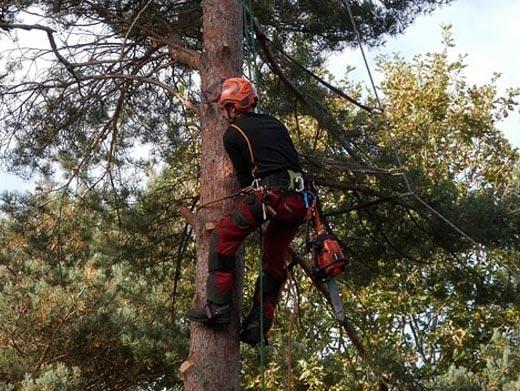 https://www.treeservicegreenwood.com/ website