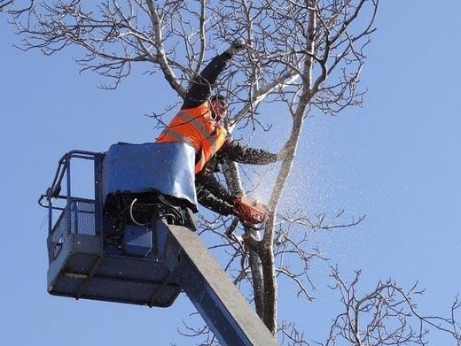 https://www.treeservicewheaton.com/ website