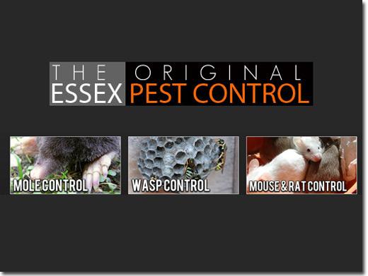 http://essexpestcontrol.co.uk/ website