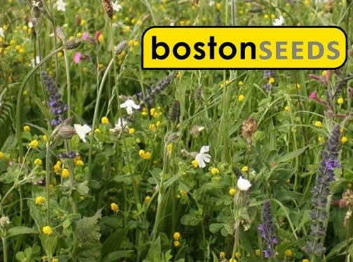 http://www.bostonseeds.com/ website