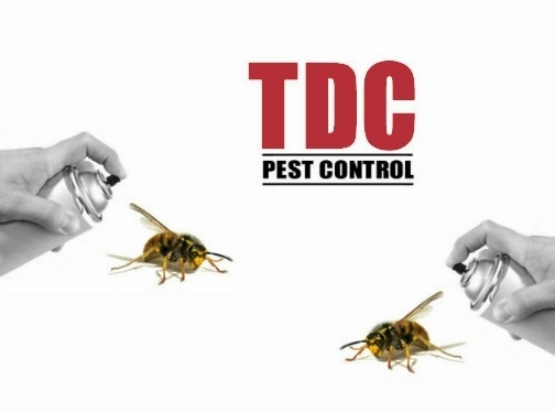 http://www.tdcpestcontrol.co.uk/ website
