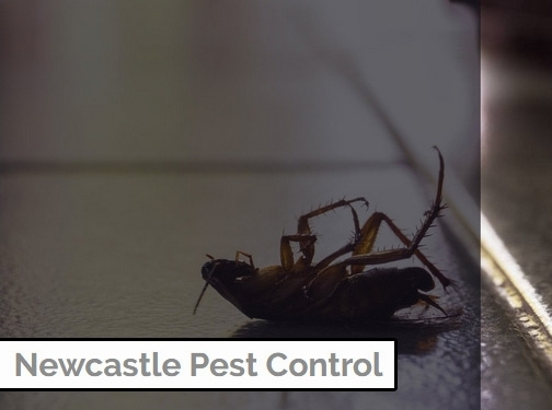 http://www.newcastlepestcontroller.co.uk/ website
