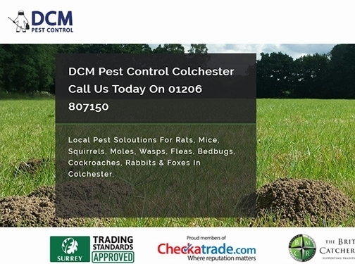 https://www.pest-control-colchester.co.uk/ website