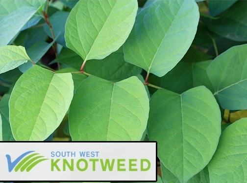 https://www.southwestknotweed.co.uk/ website