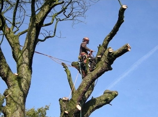 https://www.chester-tree-surgeon.co.uk/ website